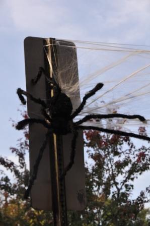 Spider sign