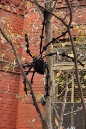 Spider tree1